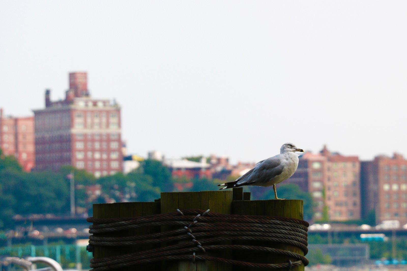 Coney Island Brooklyn, NY Private Investigator
