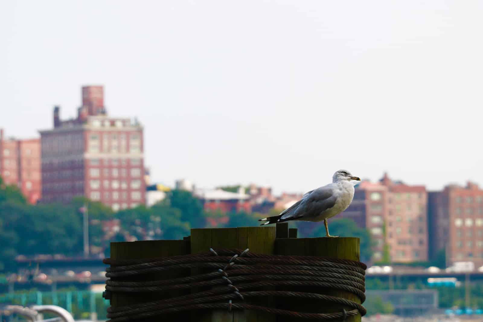 RAMBO Brooklyn, NY Private Investigator